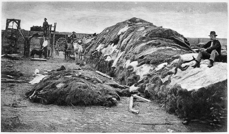 buffalo-extermination